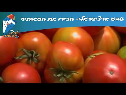 טבע ארצישראלי: הכירו את העגבניה!