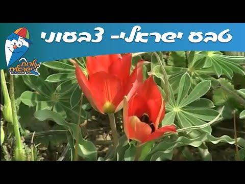 טבע ישראלי: צבעוני