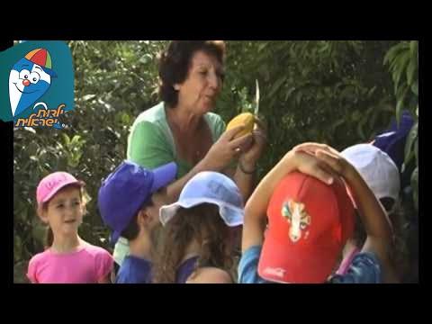 שירי ילדים לסוכות – חודשי השנה – תשרי – ארבעת המינים