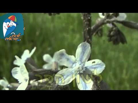 טבע ישראלי: לשון הפר